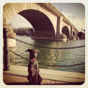 tucker london bridge